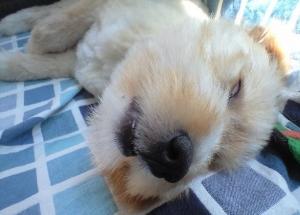 ココバク睡