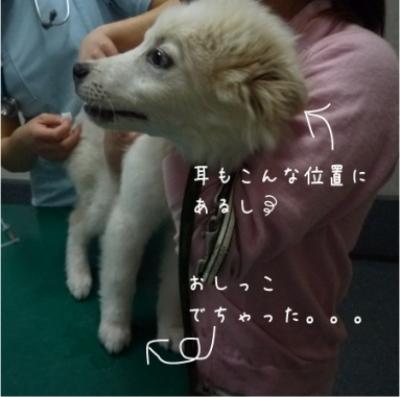 JOy初狂犬病