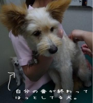COCO初狂犬病