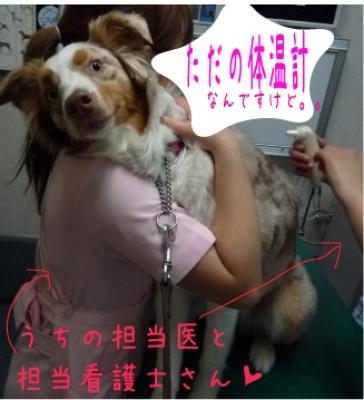 POOCH狂犬病