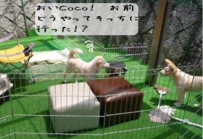 JOYCOCO迷路2