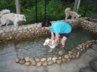 Pooch温泉