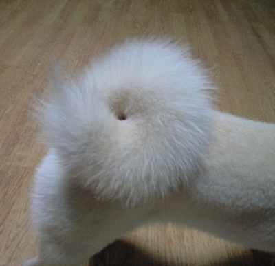 Tail of Gaou