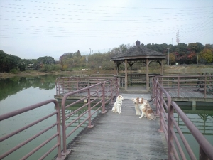 27Nov緑公園