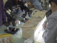塩の結晶を作る