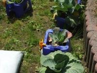 植物教材の準備