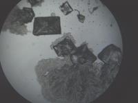 食塩の結晶化