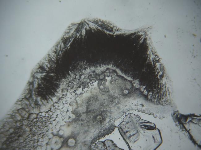 顕微鏡下で再結晶
