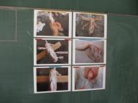 手羽先の解剖の準備「手羽先」