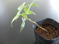 植物の発芽と成長