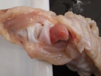 手羽先の解剖