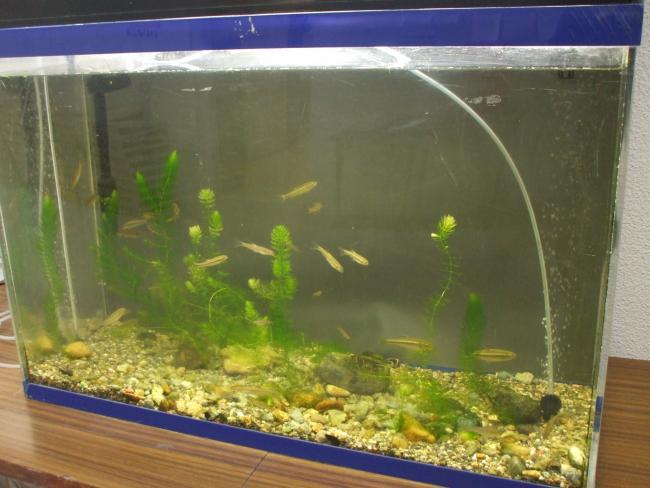 川魚の水槽
