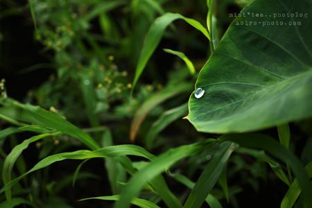 drop03.jpg