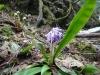 下山ポイントの花