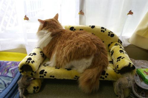 ボクのソファでカーテンの猫とマッタリ♪