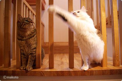 はな、猫パンチ!