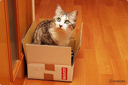 われもの注意の箱に入るギンタ