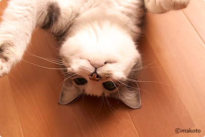 Cat Life 猫写真ギャラリーに新作追加(2006/09/16)