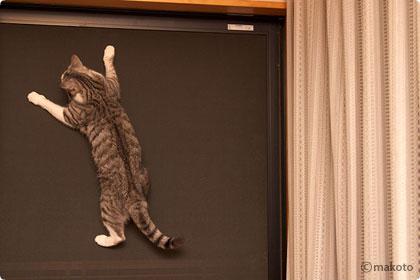 Cat Life 猫写真ギャラリーに新作追加(2006/09/24)