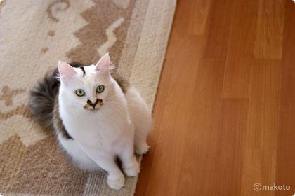 Cat Life 猫写真ギャラリーに新作追加(2006/09/30)
