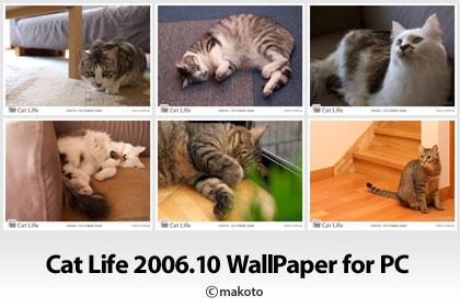 Cat Life 2006年10月の猫写真壁紙をアップ