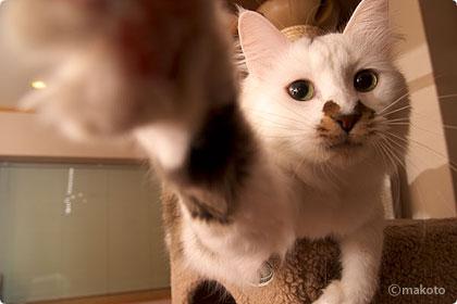 Cat Life 猫写真ギャラリーに新作追加(2006/10/08)