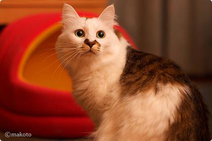 Cat Life 猫写真ギャラリーに新作追加(2006/10/29)