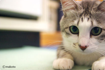 Cat Life 猫写真ギャラリーに新作追加(2006/11/05)