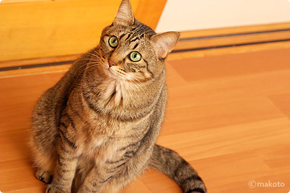 Cat Life 猫写真ギャラリーに新作追加(2006/11/12)