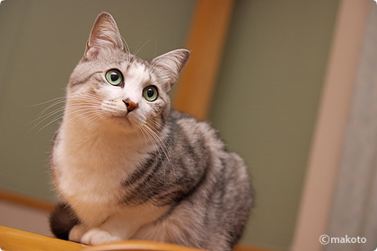Cat Life 猫写真ギャラリーに新作追加(2006/11/26)