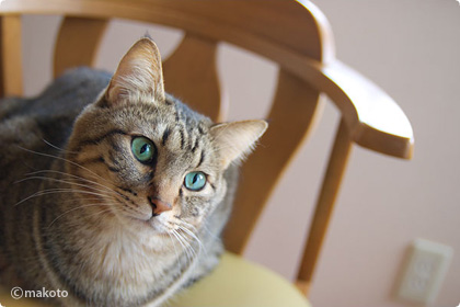 Cat Life 猫写真ギャラリーに新作追加(2006/12/03)