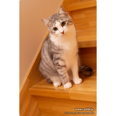 階段の途中で佇む