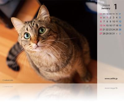CatLife卓上カレンダー[2008年版]