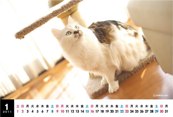 CatLife卓上カレンダー[2011]