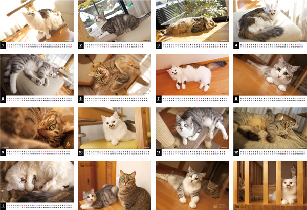 CatLife卓上カレンダー[2011]サムネイル