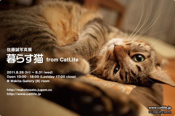 暮らす猫 from CatLife