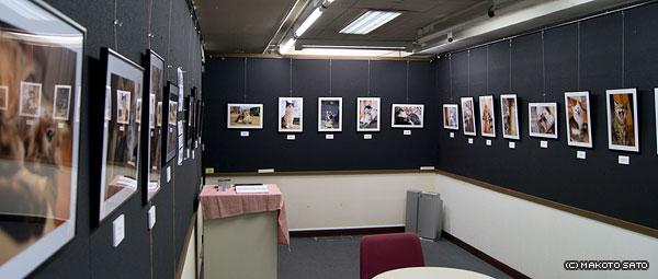 名古屋大須ワキタギャラリーでの展示の様子
