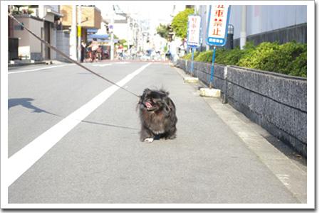 ブサイク犬�