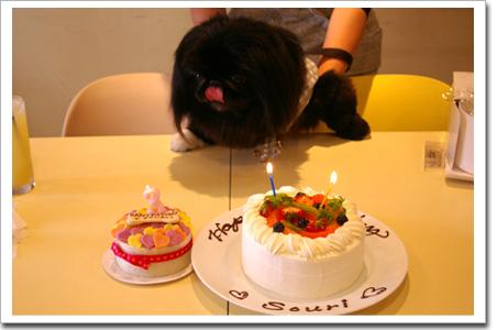 犬用ケーキはこっちやで