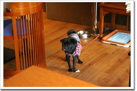 ダイニングカフェロイドライトの看板犬