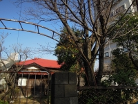 旧壁島医院 茅ヶ崎市