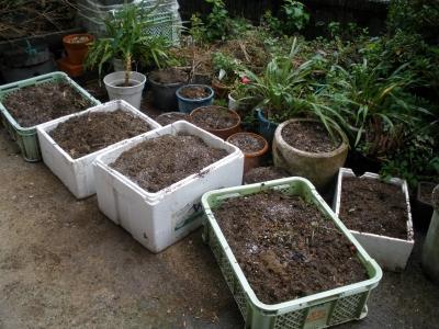 冬野菜の土