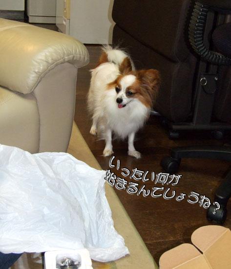 09.10.25_アニーvsジェダイ1