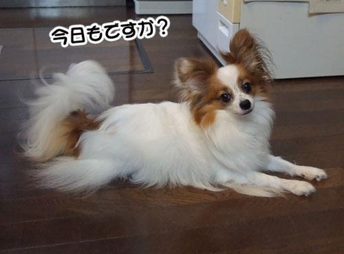 10.9.11_S5Pro_試し撮り1