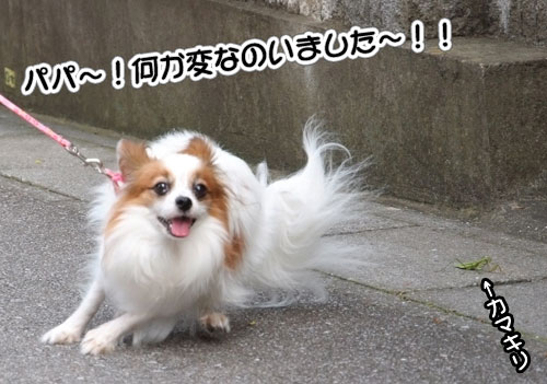 10.10.17_カマキリ5