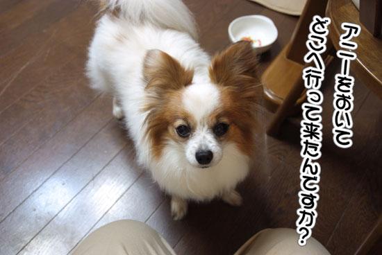 11.5.21_京成バラ園22