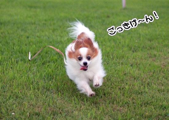 11.8.6_幕張海浜公園1