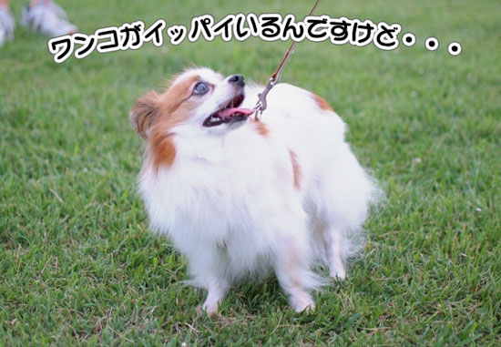 11.8.6_幕張海浜公園8