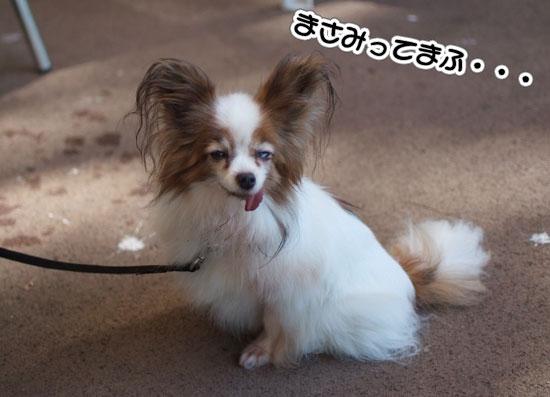 11.9.18_昭和記念公園オフ会2-17
