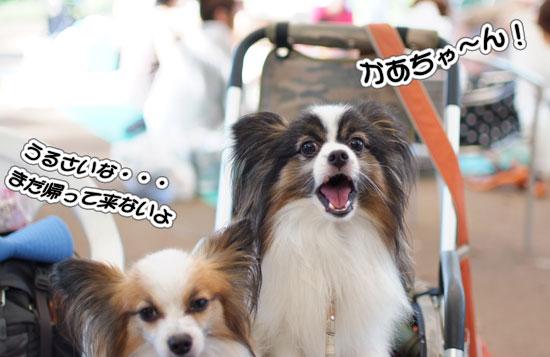 11.9.18_昭和記念公園オフ会2-19